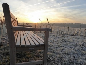 Bench and Frost